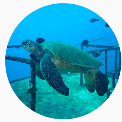 St Anthony Dive - Sea Turtle