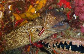 maui moray eel