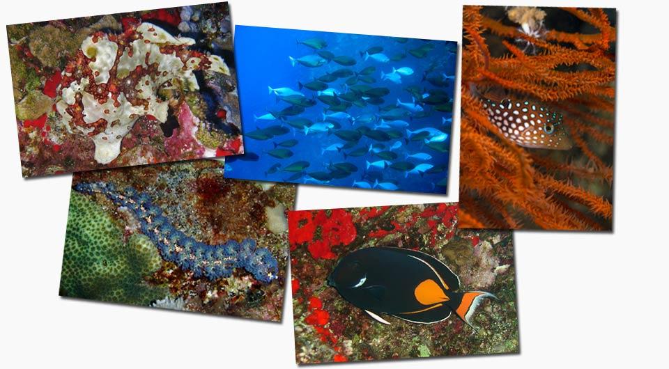 scuba diving molokini back wall