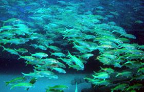 school of fish during scuba dive