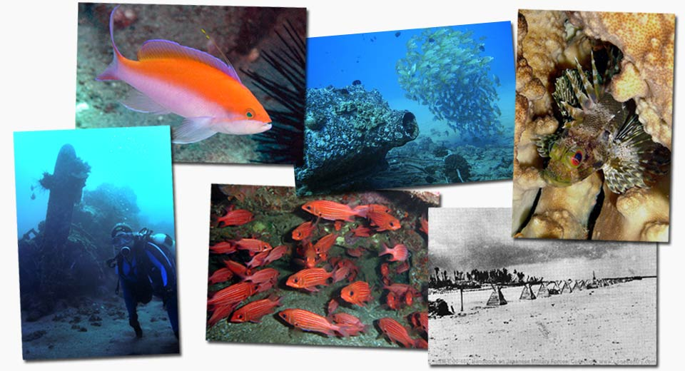 dive WWII Objects Maui montage