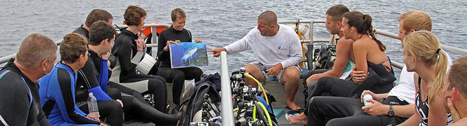 our Maui scuba diving guides
