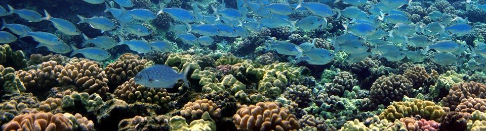 Maui Scuba Dives