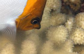 fish coral spawning
