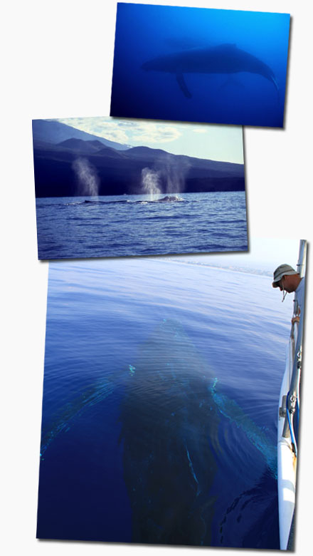 whale watching charter