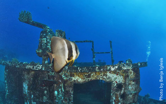 batfish-with-wreck-benja-wide-copy